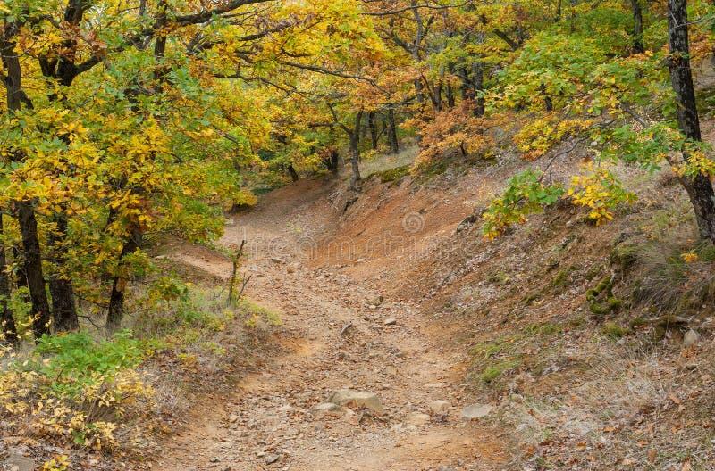 岩石路在秋季的山森林里 库存照片