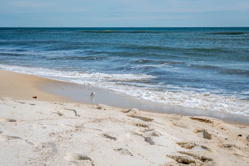 岸的俯视的看法在Perdido关键国家公园,佛罗里达 免版税图库摄影