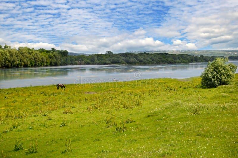 岸的简单的河、草甸和洪泛区森林 免版税库存照片