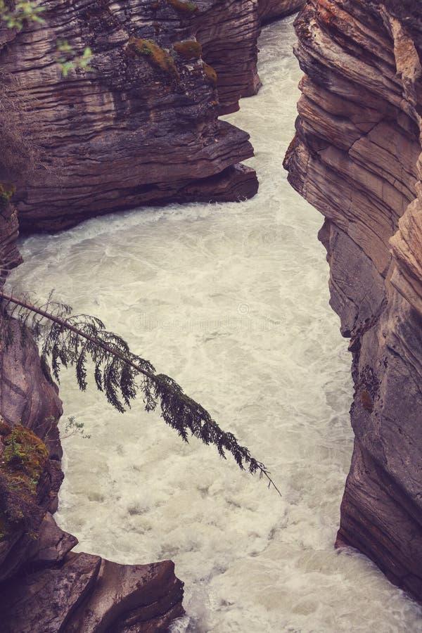 峡谷在班夫NP 免版税库存照片