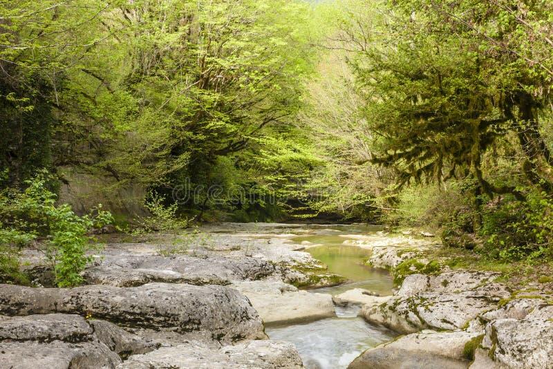 峡谷在阿布哈兹 免版税图库摄影