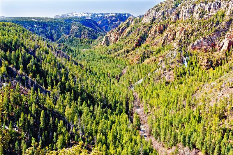 峡谷小河北部橡木sedona视图 免版税库存图片