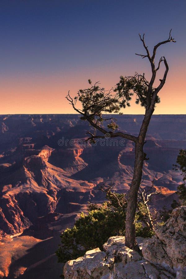 峡谷干燥全部结构树 库存照片