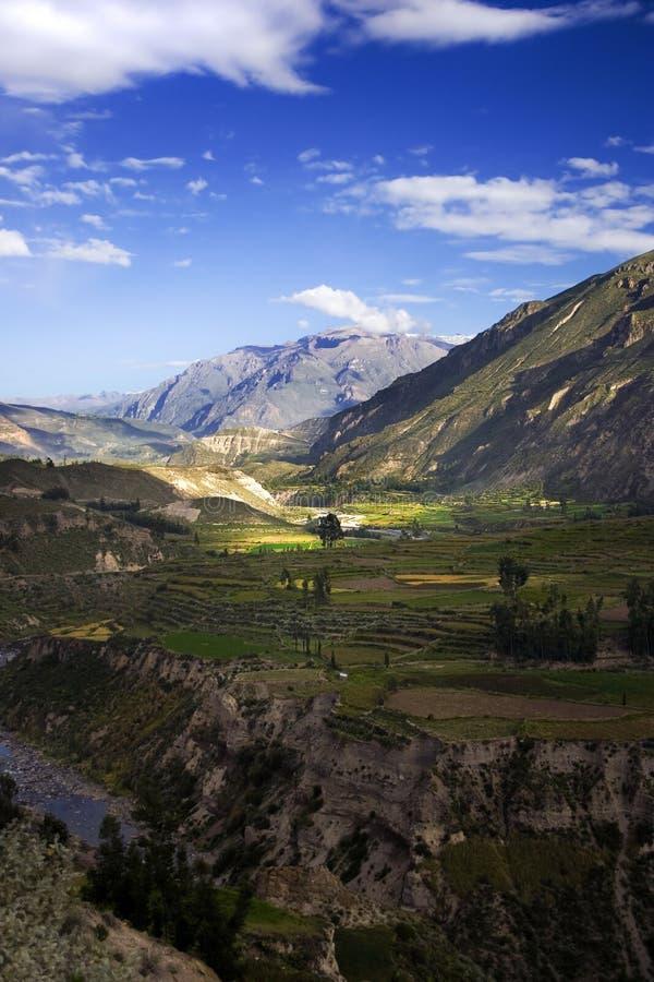 峡谷colca秘鲁 免版税库存照片