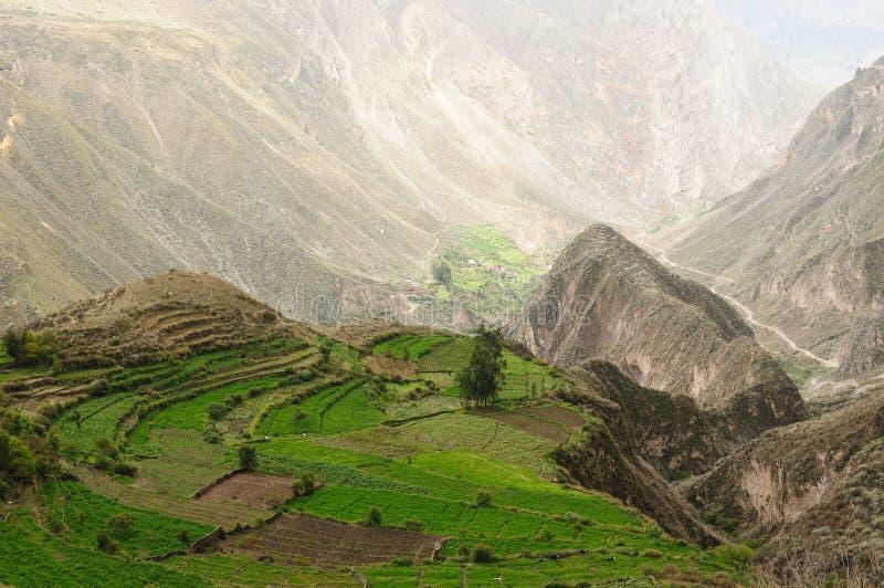 峡谷cotahuasi秘鲁 库存图片