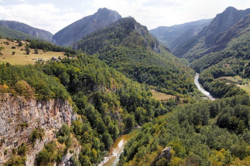 峡谷montenegro塔拉 图库摄影