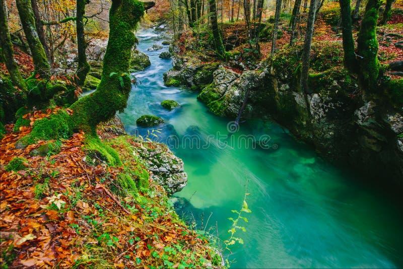 峡谷Mostnica (Mostnice Korita)的意想不到的看法 免版税库存图片