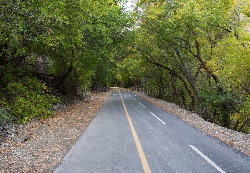 峡谷provo线索结构树 免版税库存照片