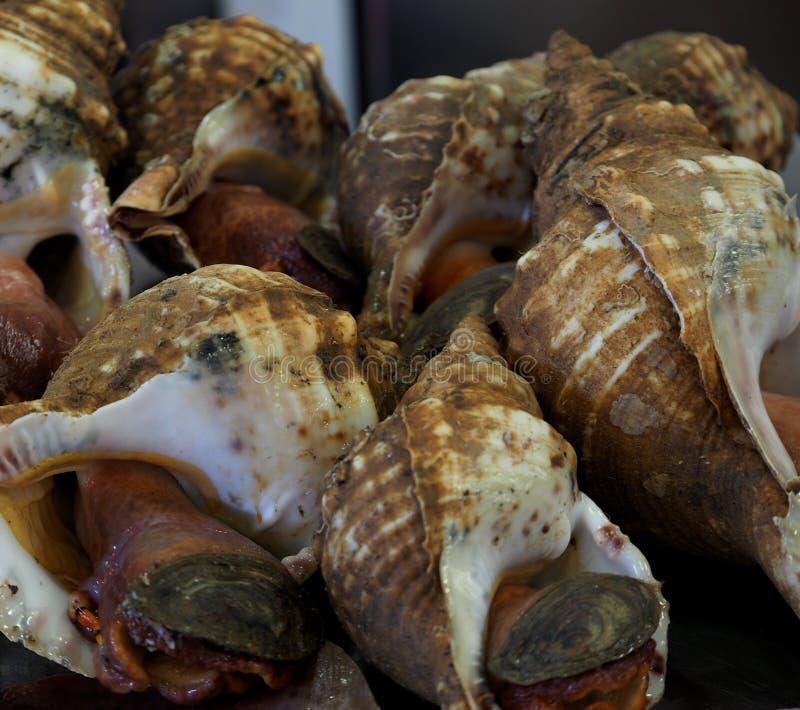 峨螺待售在市场上在法鲁葡萄牙 库存照片