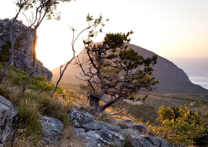 Download 峭壁杜松 库存照片. 图片 包括有 海湾, 小山, 峭壁, 日出, 公园, 岩石, 横向, 海运, 高涨 - 22350666