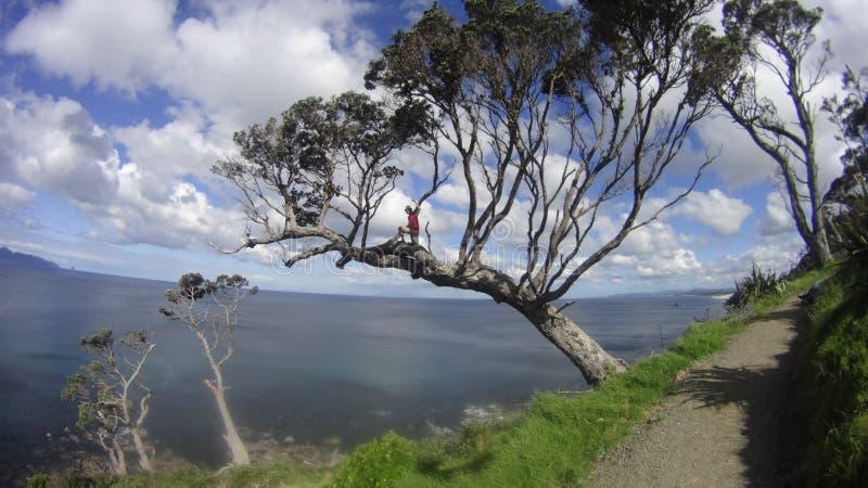 峭壁树 免版税图库摄影