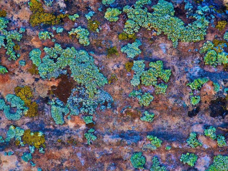 峭壁视觉:在砂岩的绿松石地衣 库存图片