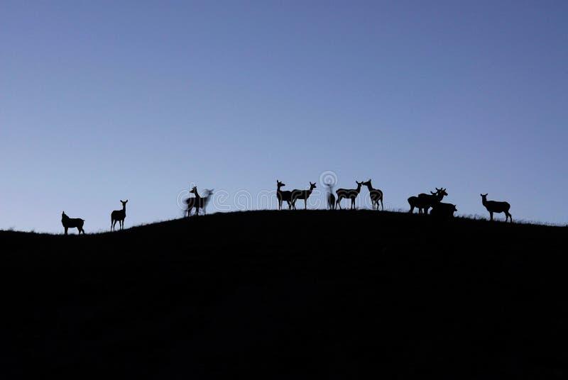 峭壁deers 库存照片