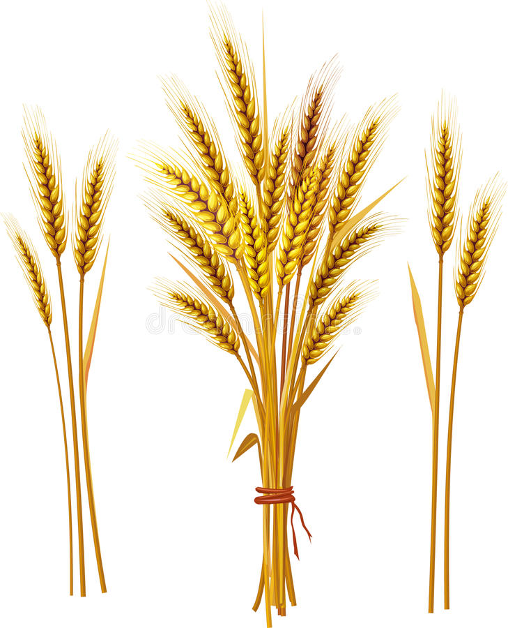 峰值麦子 库存例证