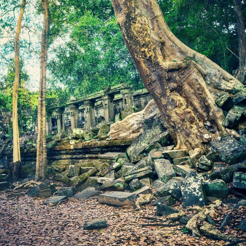 崩山大仑Mealea或桶盖Mealea寺庙 angkor banteay柬埔寨湖lotuses收割siem srey寺庙 柬埔寨 库存照片