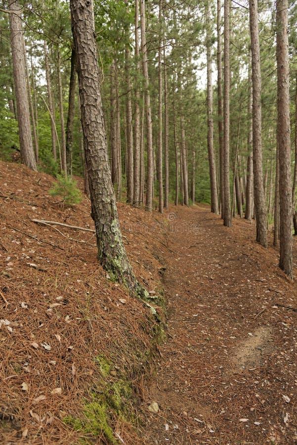 州长诺尔斯状态森林,威斯康辛 免版税图库摄影