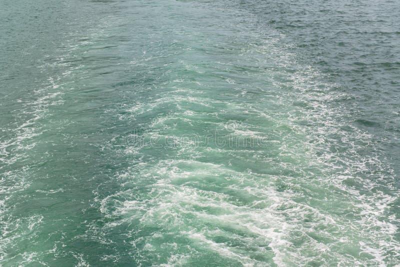 巡航划线员水苏醒  免版税库存照片
