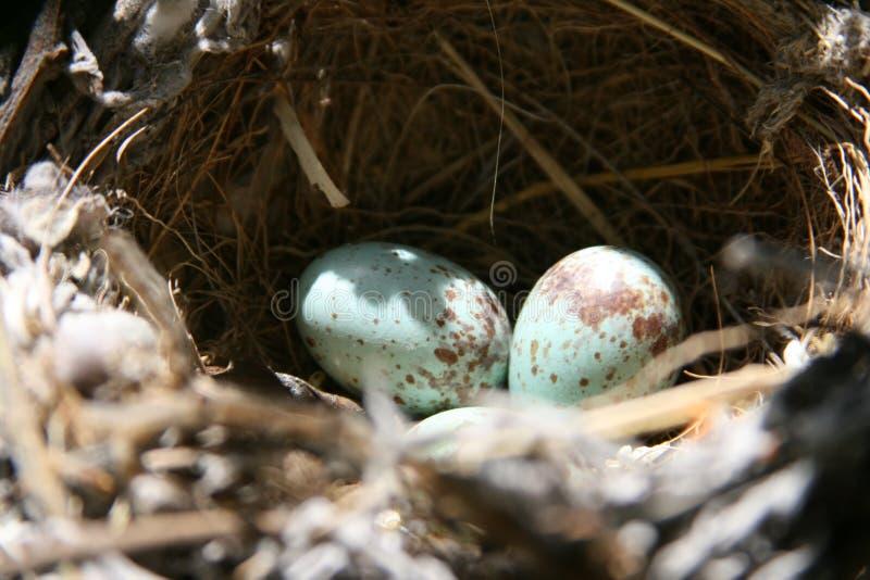 巢和鸡蛋 免版税图库摄影