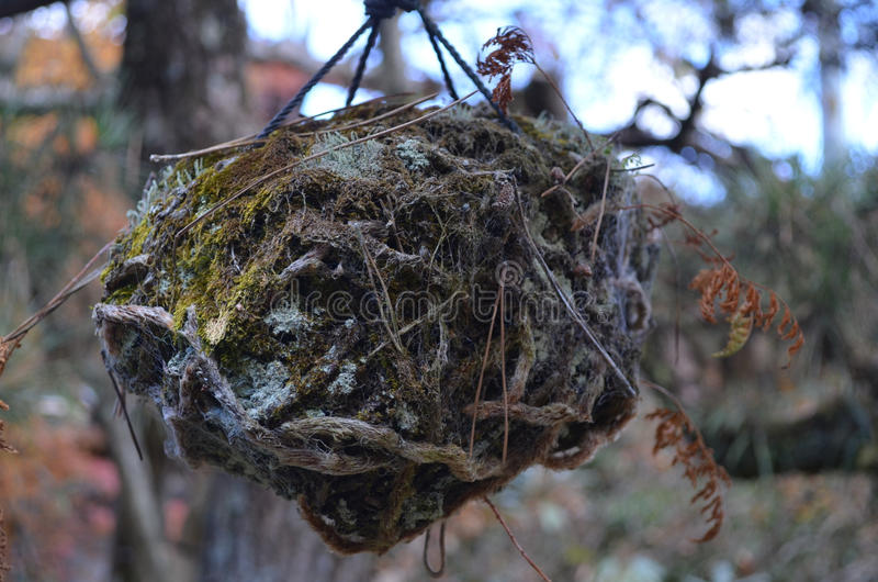 巢在日本 库存照片