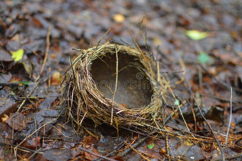 巢在graund说谎 免版税库存图片