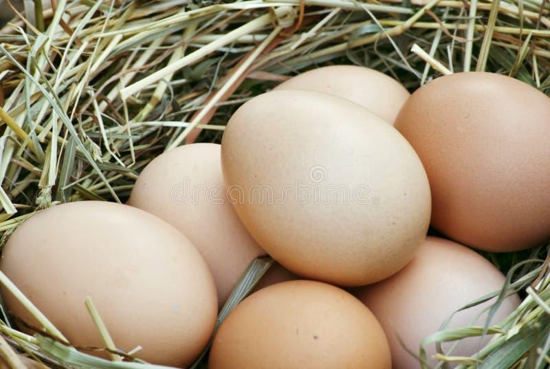 巢用鸡蛋 库存照片