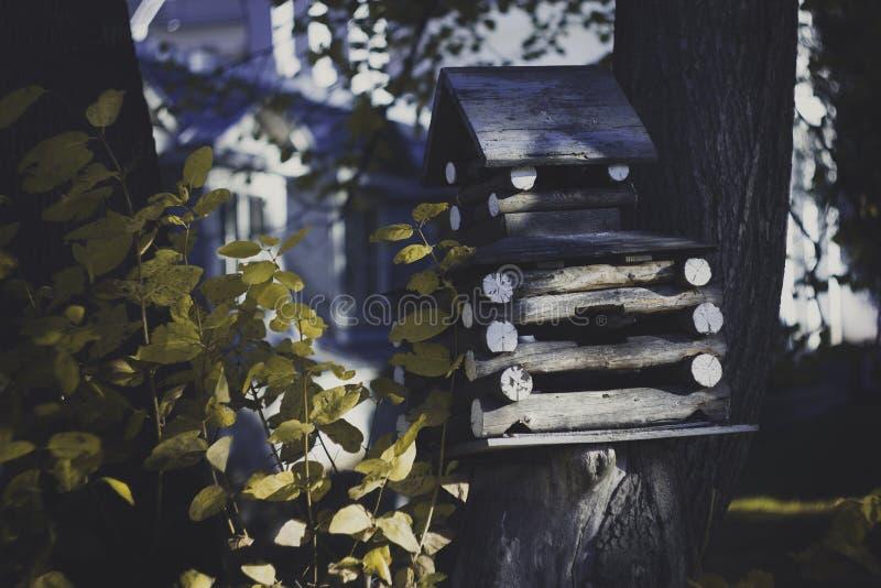 巢箱 圣彼德堡 Elagin海岛 库存照片