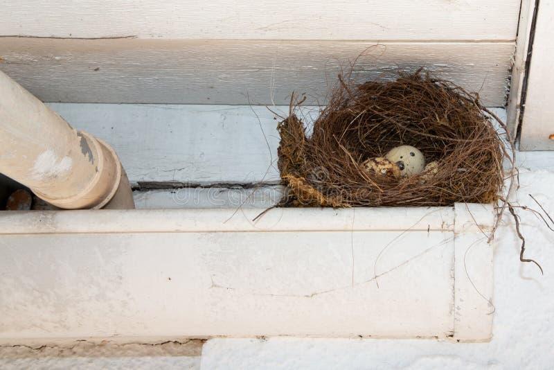 巢鸟用在天沟屋顶家下的小鸡蛋 库存图片