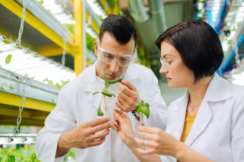 工作与同事的农业学家,当种植绿色时 库存图片