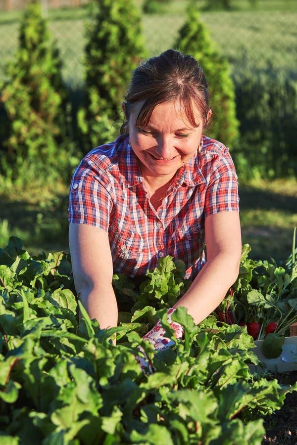 工作在一个家庭菜园里的妇女 库存照片