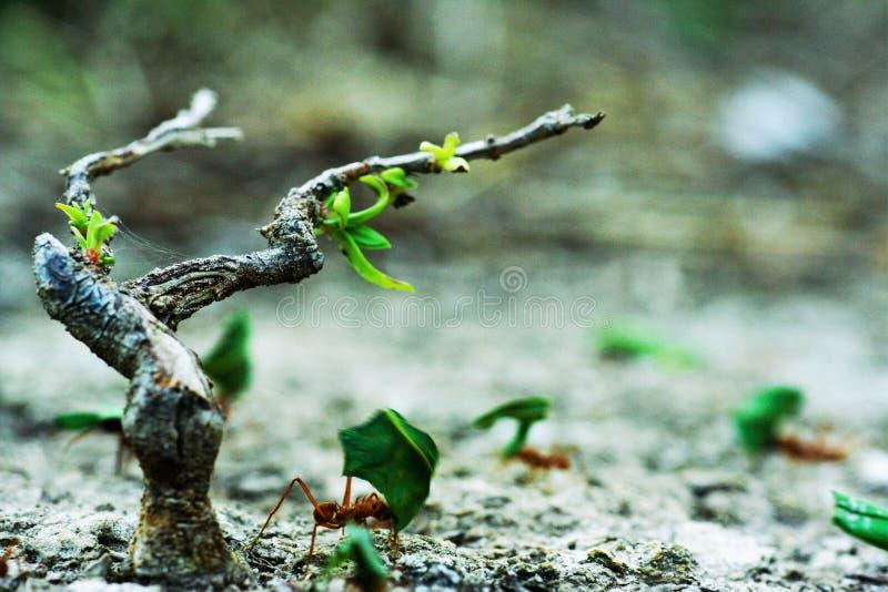工作在一棵小的树附近的蚂蚁 免版税库存图片