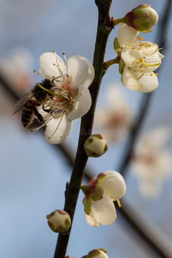 工作在中国的蜂 免版税库存照片