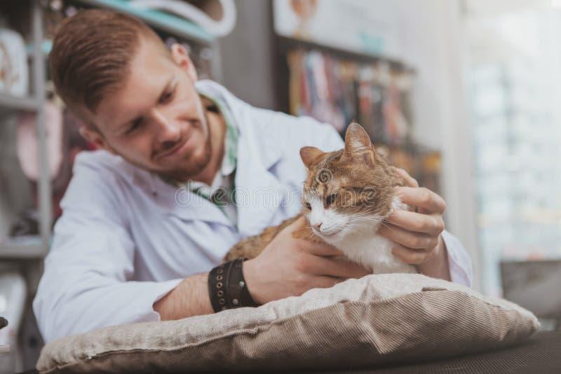 工作在他的诊所的英俊的男性兽医 免版税库存图片