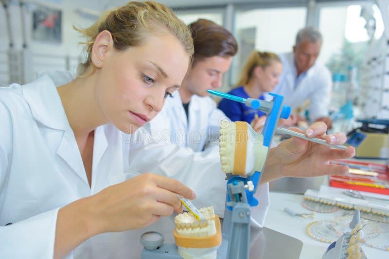 工作在假牙的女性化验员 库存照片