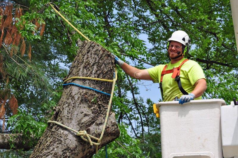 工作在大树的专业树木栽培家 免版税库存照片