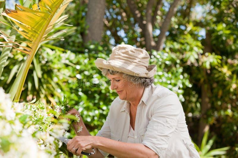 工作在她的庭院里的成熟妇女 库存图片