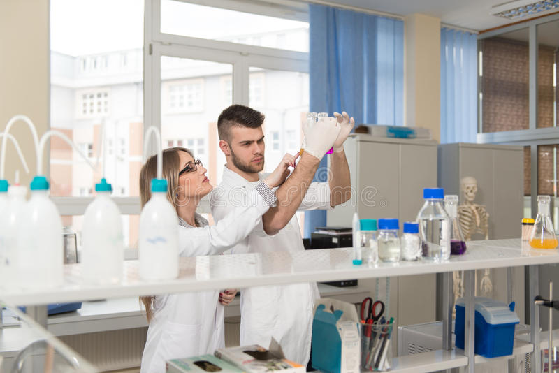 工作在实验室的学生科学家 库存照片