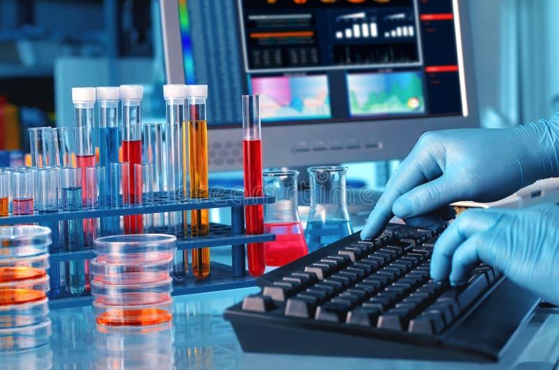 工作在实验室里的研究员分析和键入在计算机上 库存照片