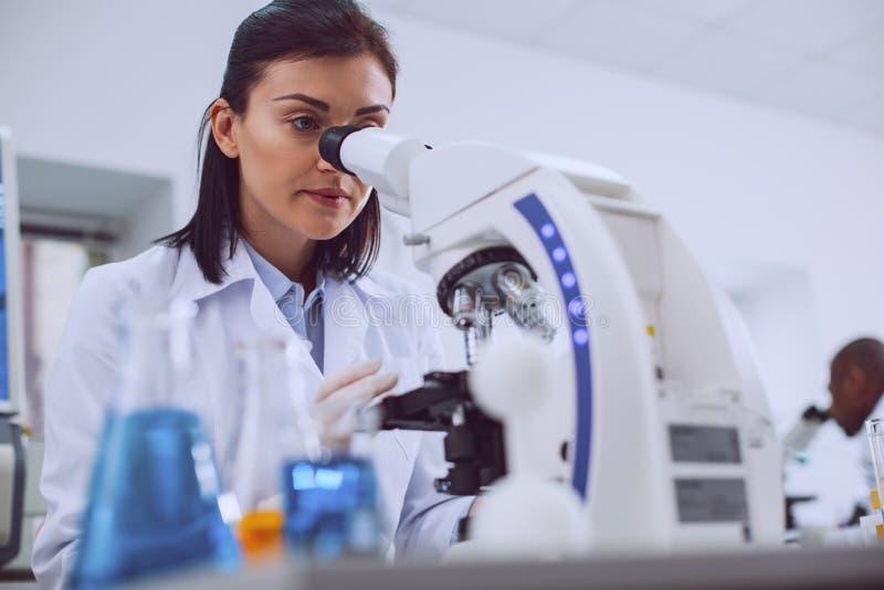 工作在实验室里的被集中的生物学家 免版税库存照片
