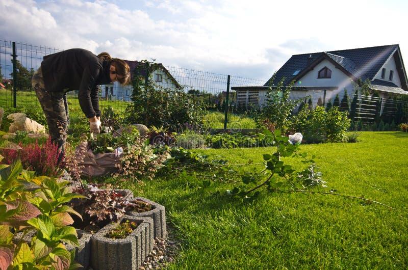 工作在庭院里的妇女,切开植物的剩余枝杈 库存图片