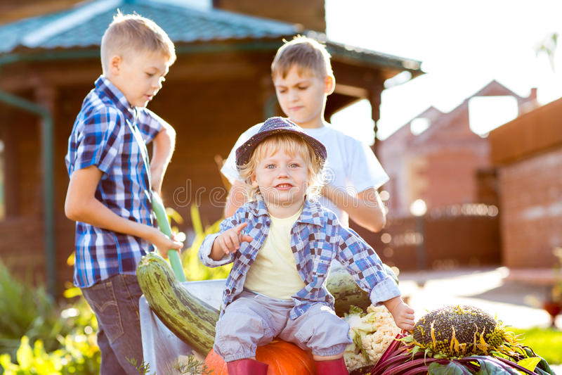 工作在庭院里的孩子 收获在秋天的孩子 免版税图库摄影