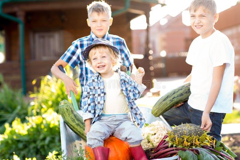 工作在庭院里的孩子 收获在秋天的孩子 库存照片