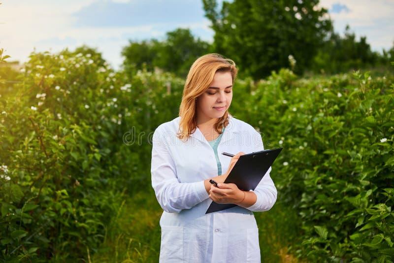 工作在果子庭院里的妇女科学家 生物学家审查员审查黑莓灌木 免版税图库摄影