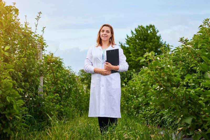 工作在果子庭院里的妇女科学家 生物学家审查员审查黑莓灌木 库存图片