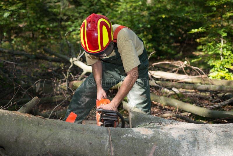 工作在森林里的伐木工人 库存图片