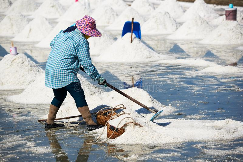 工作在盐平底锅领域的女工 免版税库存图片