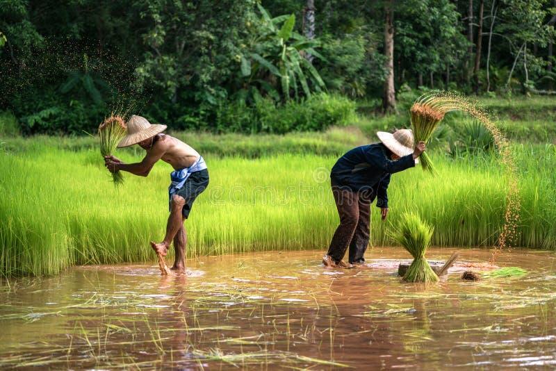 工作在种田的泰国农夫家庭 图库摄影