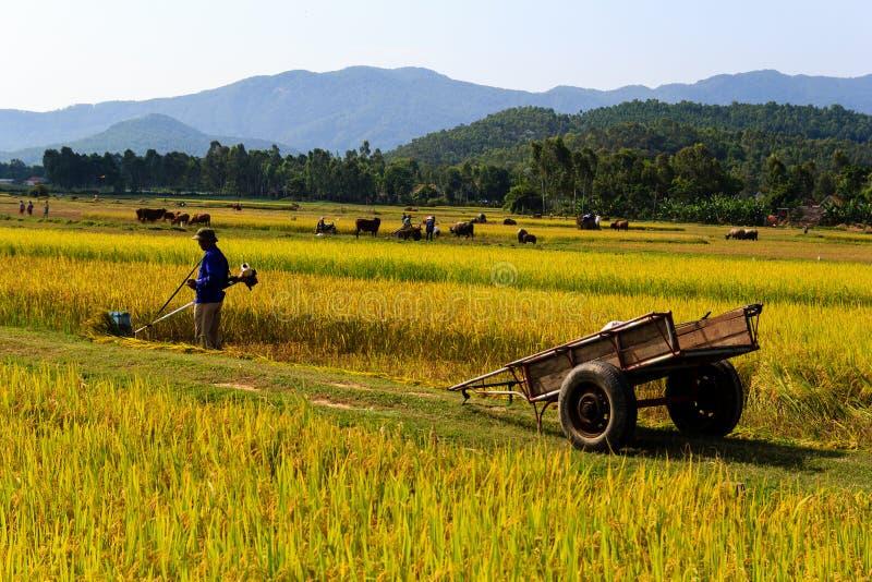 工作在米领域的越南农夫 免版税图库摄影