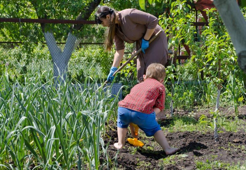 工作在菜园里的母亲和儿子 库存照片