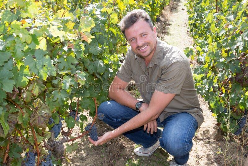 工作在葡萄园里的成功的酿酒商人 免版税图库摄影