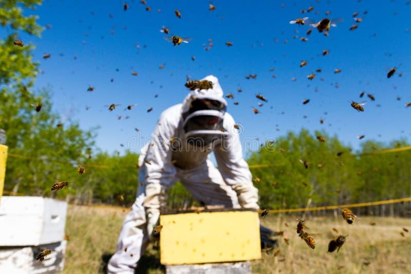 工作在蜂中的蜂农 免版税库存照片